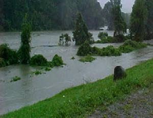 Flood Irene Nat'l Roots
